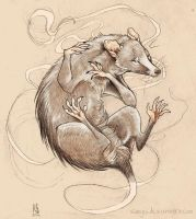 White Virginia Opossum by Saagai