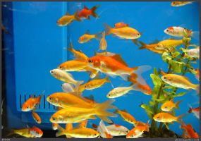 Fish Stock 0079 by phantompanther-stock