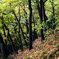 forest on a hill by donnosch