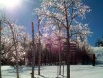 Ice Covered Trees 8 by DerpyDash64