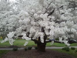 Crabapple tree full pic by xenoangelz