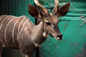 Addis Ababa Zoo by rbnsncrs