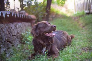 summer time by marinsuslic
