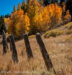 Fence posts by kayaksailor