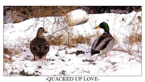 Quacked Up Love by TehSext