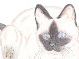 Another Siamese by PlatinumxRose