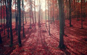 The red forest by valiunic