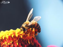 Worker bee 2 by killswitch90