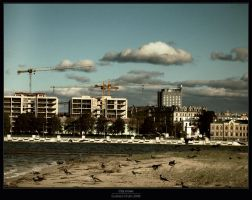 City crows by Gustavs