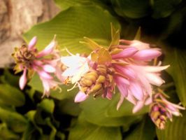 Bunch by POETRYTHROUGHLENS