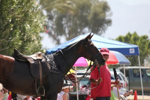 El Dorado Polo Club: Governor's Cup by ThePerfectEquestrian