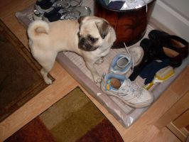 She Puts Her Bone Toy In My Shoe by tabby25