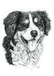 Dog -  pen and ink by czajka