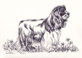 Cocker Spaniel (American) by happytimer