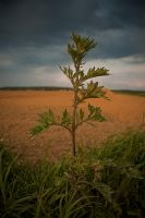 The alone plant by Touloulou