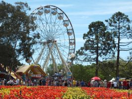 Floriade in living colour by BrendanR85