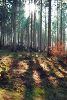 Forest Stock 34 by Sed-rah-Stock