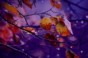 If the Rain comes by LuizaLazar