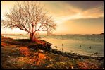 A sunset and a tree by velocista