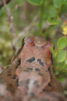 frog of fell by pekauppi