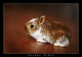 Little Redish Bunny. by sergey1984