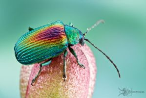 Beetle from Colombia by ColinHuttonPhoto