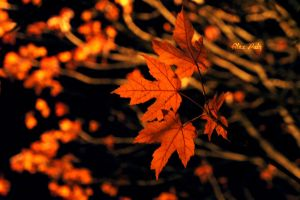 Leaves of the Night by alex13p