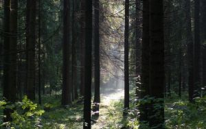 In the woods 2 by Henrikson