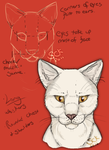 Cat facial anatomy study by ShadowCatsKey