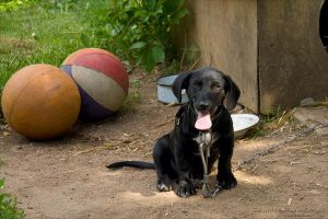 A Portrait of One Small Dog with Big Balls by rici66