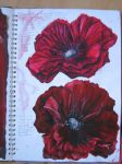 Poppies by jodieleigh