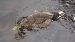 bird in the water by shaggly