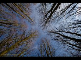 Tree-Scape by GMCPhotographics