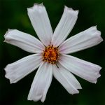 flower 166 by EphemeralMind