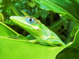 Into the Light by OECDLapushfan101