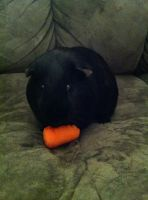 Jack with a carrot... by invaderstitch2000