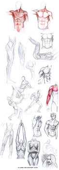anatomy studies by A-Loss