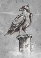 Falcon looking by Chiba-Wolf