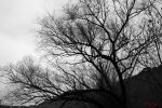 Black White Tree by MaxLeppig
