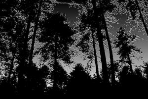 the black and silver forest by Jhickling
