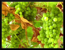 Grape. by Anere