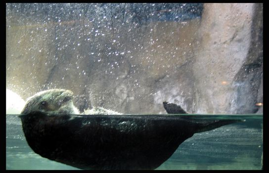an otters life by mbroadway26
