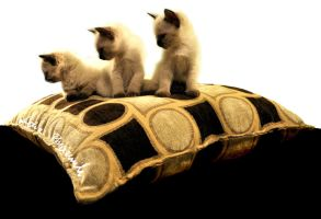 three siamese kittens by lidia-art