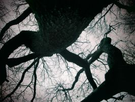 look up the trunk. by lizzybeck