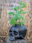 Ceramic Skull Planter by Art-by-Edum
