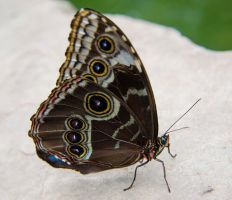 Butterfly Exposition (9) by Mocris