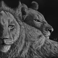 Lion and Lioness by damonahsteezy