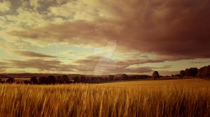 Scotland fields by FrantisekSpurny