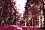 Pink Forest by SharpePhocus