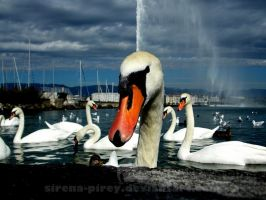 Tadaam! Here I am!( my favorite place in Geneva) by sirena-pirey